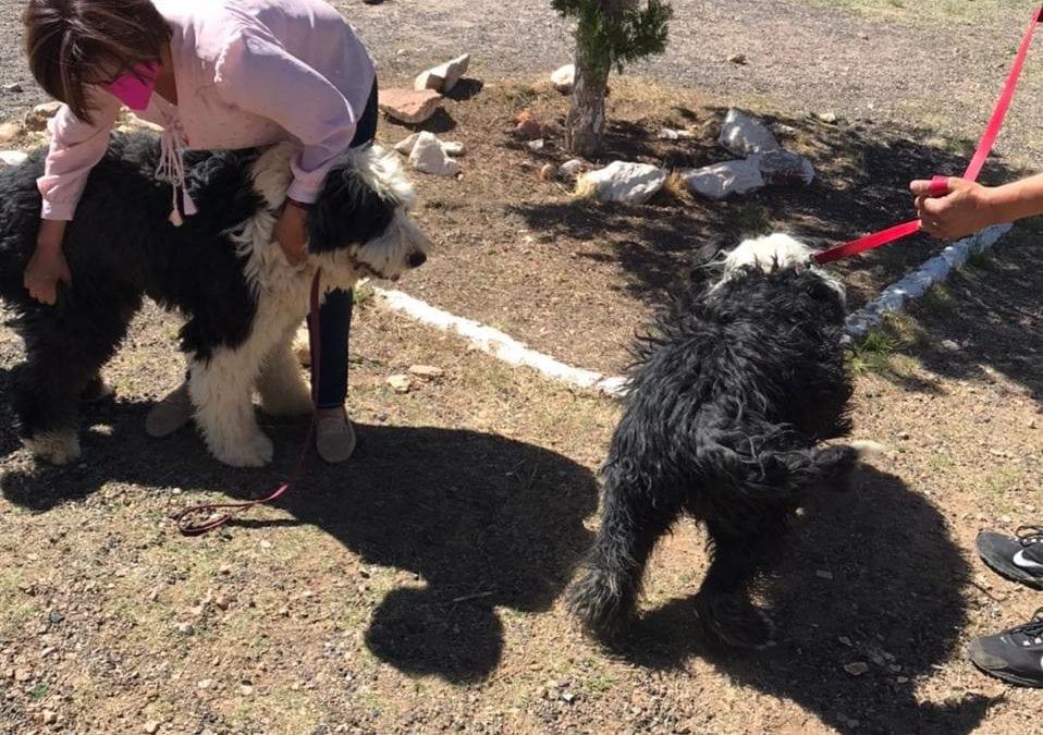 Gobierno Municipal de Cananea informa que la jornada de vacunación en pro de la #Salud de nuestras mascotas se  realiza en tiempo y forma en los puntos ya establecidos.
